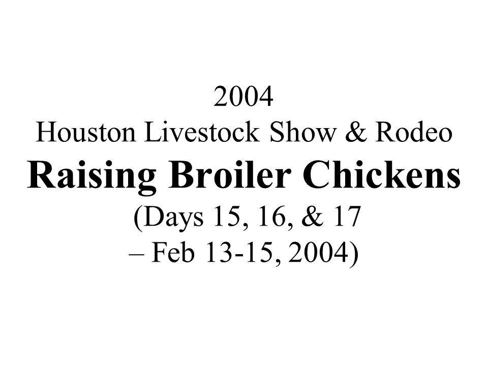 2004 Houston Livestock Show & Rodeo Raising Broiler Chickens (Days 15, 16, & 17 – Feb 13-15, 2004)