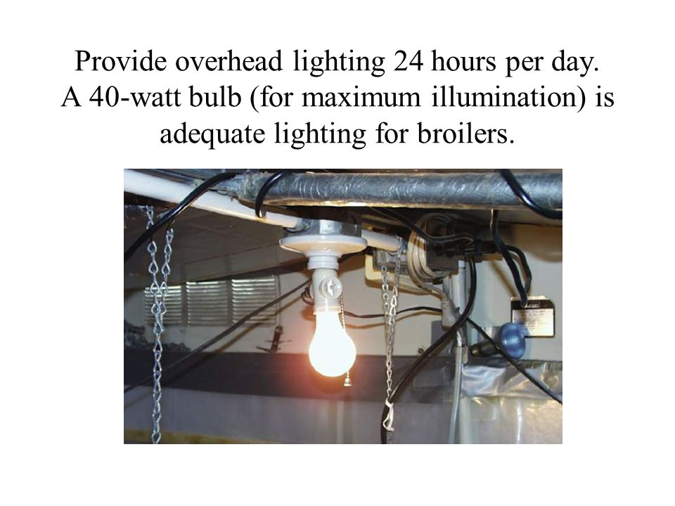 Provide overhead lighting 24 hours per day.