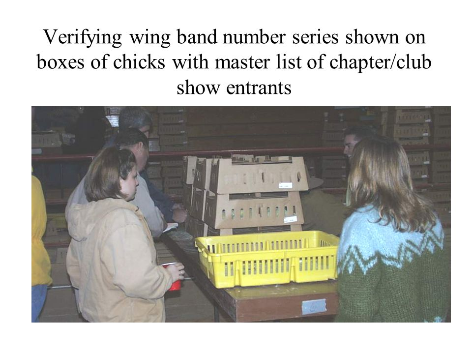 Verifying wing band number series shown on boxes of chicks with master list of chapter/club show entrants