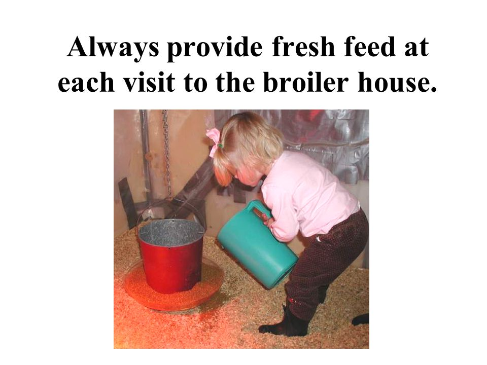 Always provide fresh feed at each visit to the broiler house.