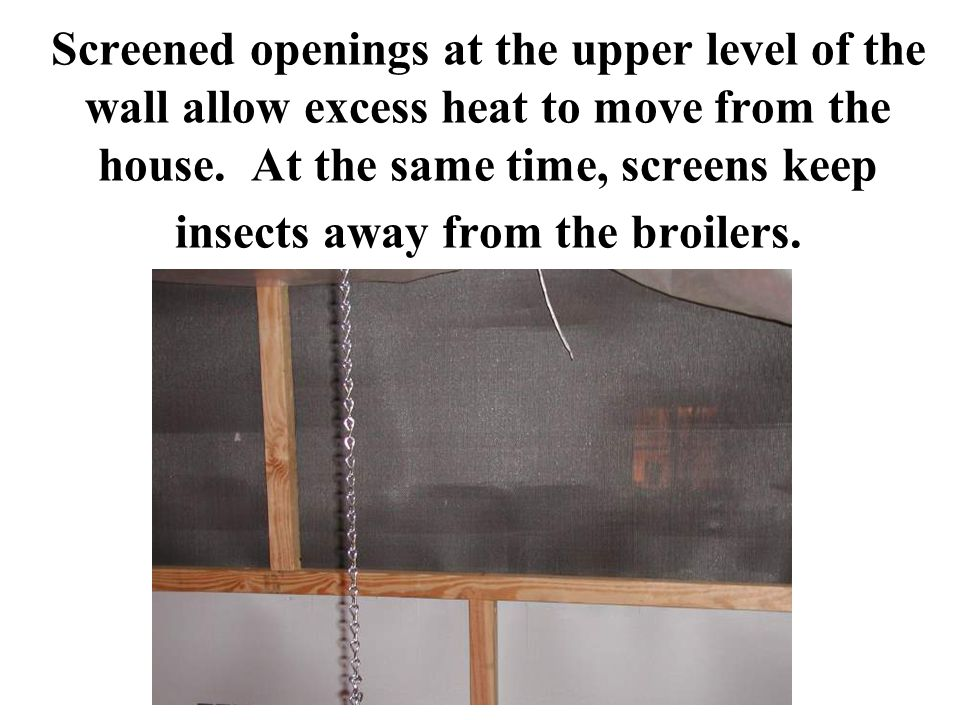 Screened openings at the upper level of the wall allow excess heat to move from the house.