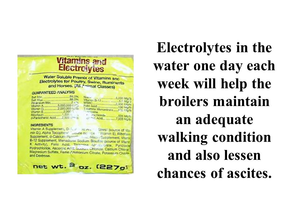 Electrolytes in the water one day each week will help the broilers maintain an adequate walking condition and also lessen chances of ascites.