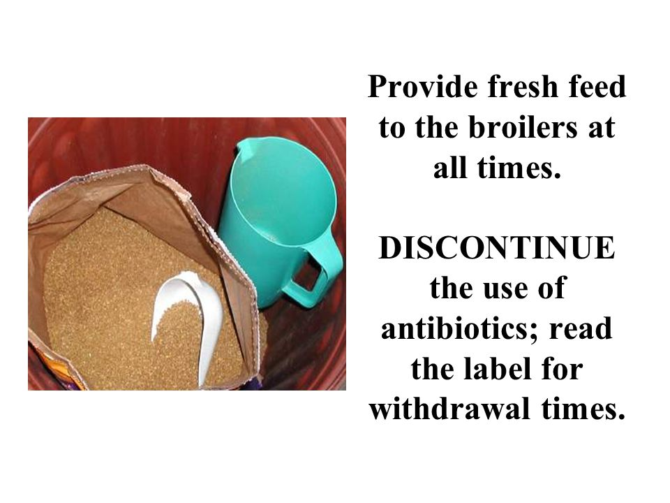 Provide fresh feed to the broilers at all times. DISCONTINUE the use of antibiotics; read the label for withdrawal times.