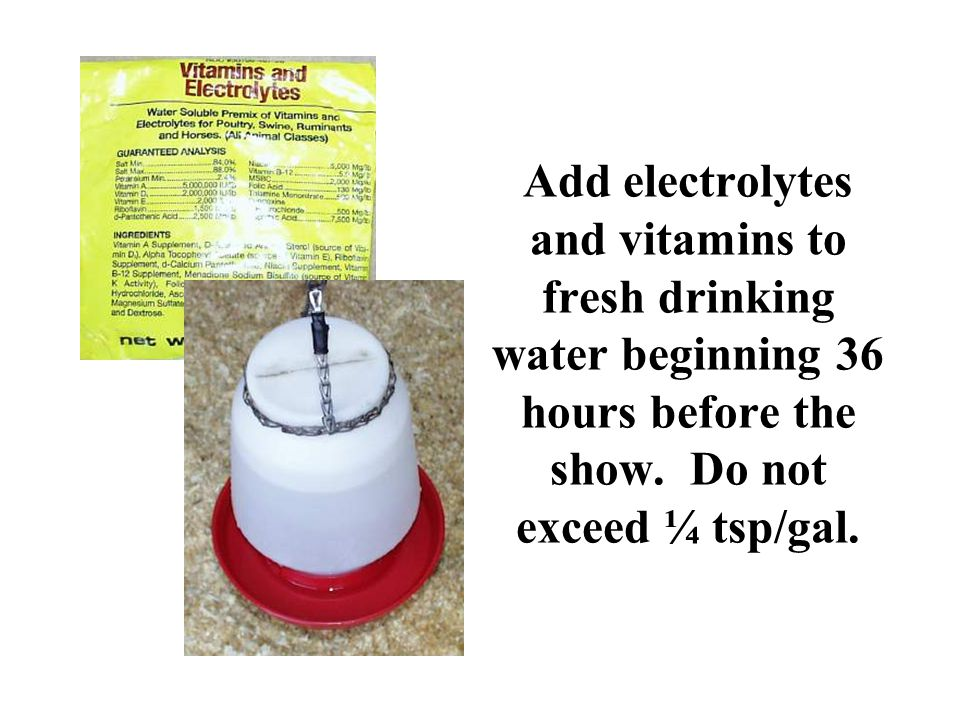 Add electrolytes and vitamins to fresh drinking water beginning 36 hours before the show. Do not exceed ¼ tsp/gal.