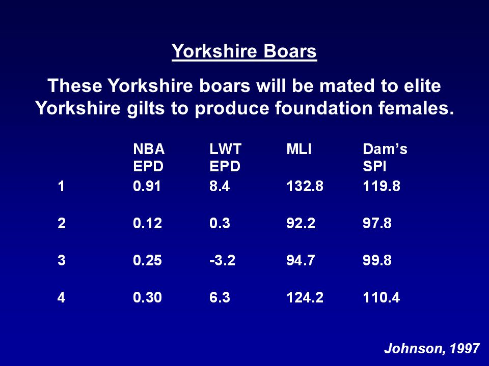 Yorkshire Boars These Yorkshire boars will be mated to elite Yorkshire gilts to produce foundation females.