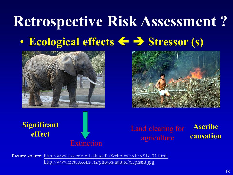 13 Retrospective Risk Assessment ? Ecological effects   Stressor (s) Extinction Land clearing for agriculture Significant effect Ascribe causation P