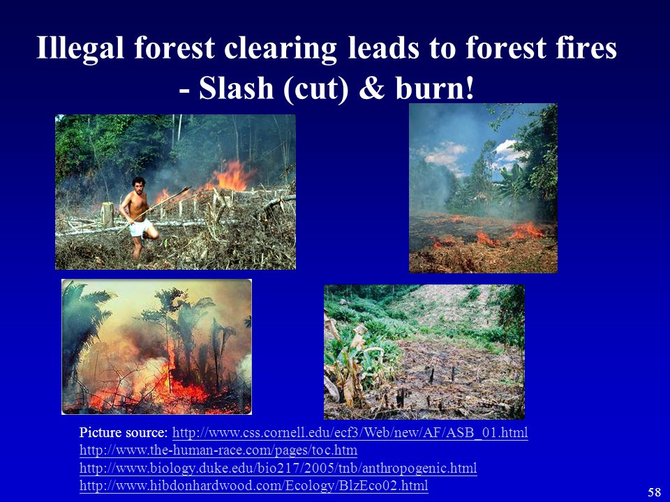 58 Illegal forest clearing leads to forest fires - Slash (cut) & burn! Picture source: http://www.css.cornell.edu/ecf3/Web/new/AF/ASB_01.html http://w