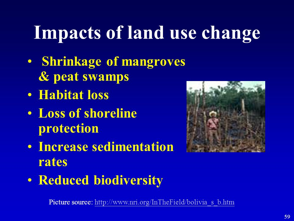 59 Impacts of land use change Shrinkage of mangroves & peat swamps Habitat loss Loss of shoreline protection Increase sedimentation rates Reduced biodiversity Picture source: http://www.nri.org/InTheField/bolivia_s_b.htmhttp://www.nri.org/InTheField/bolivia_s_b.htm