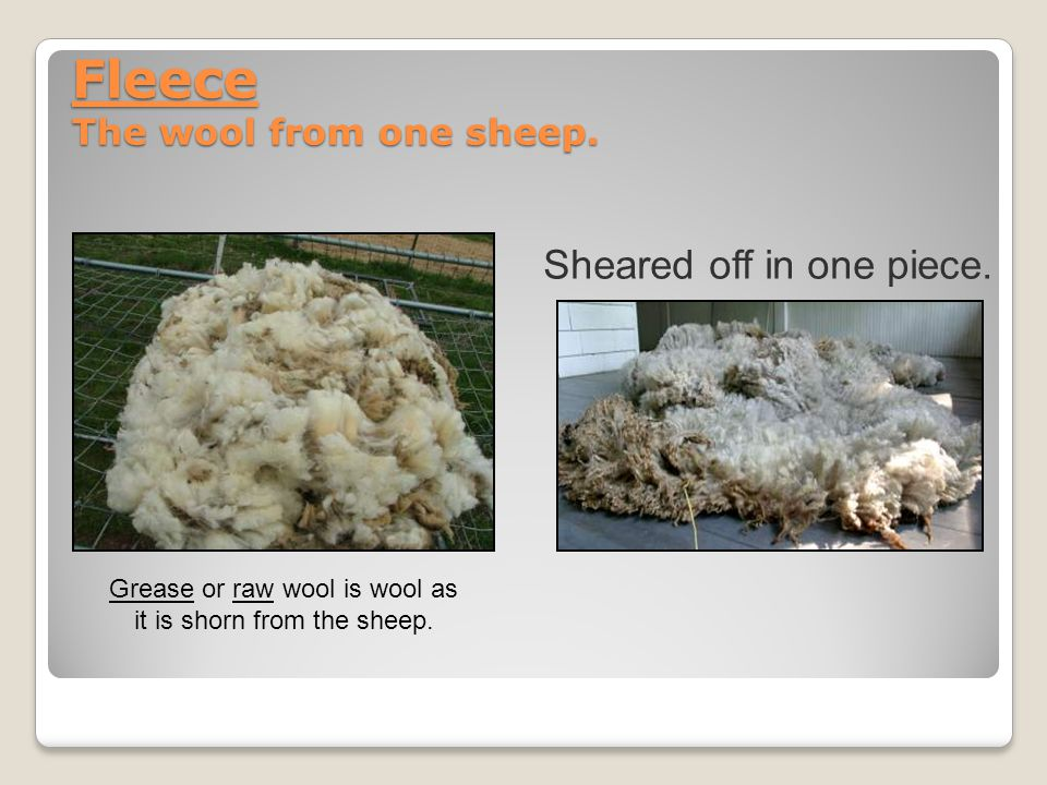Fleece The wool from one sheep. Sheared off in one piece.