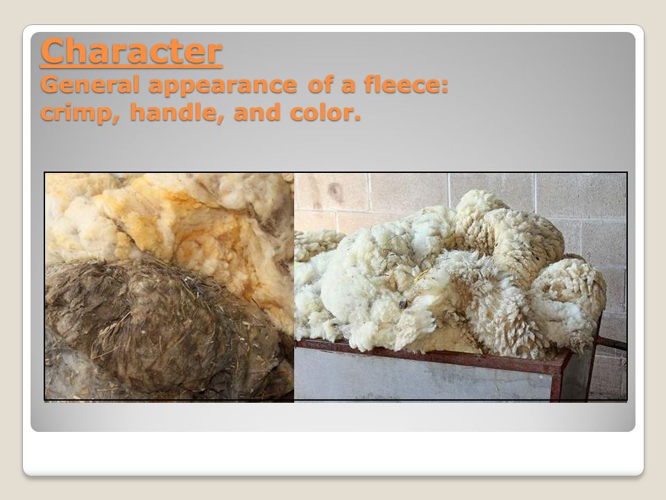 Character General appearance of a fleece: crimp, handle, and color.