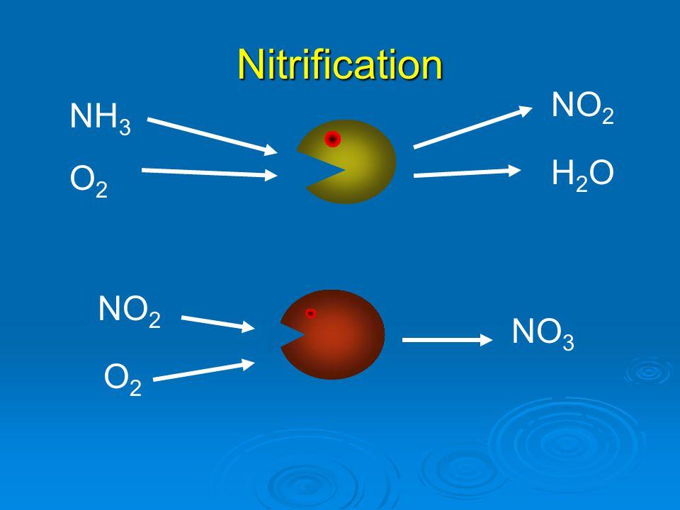 Nitrification NH 3 NO 2 NO 3 H2OH2O NO 2 O2O2 O2O2