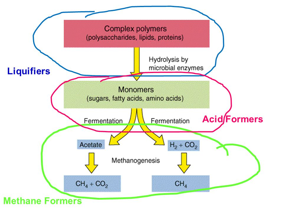 Acid Formers Methane Formers Liquifiers