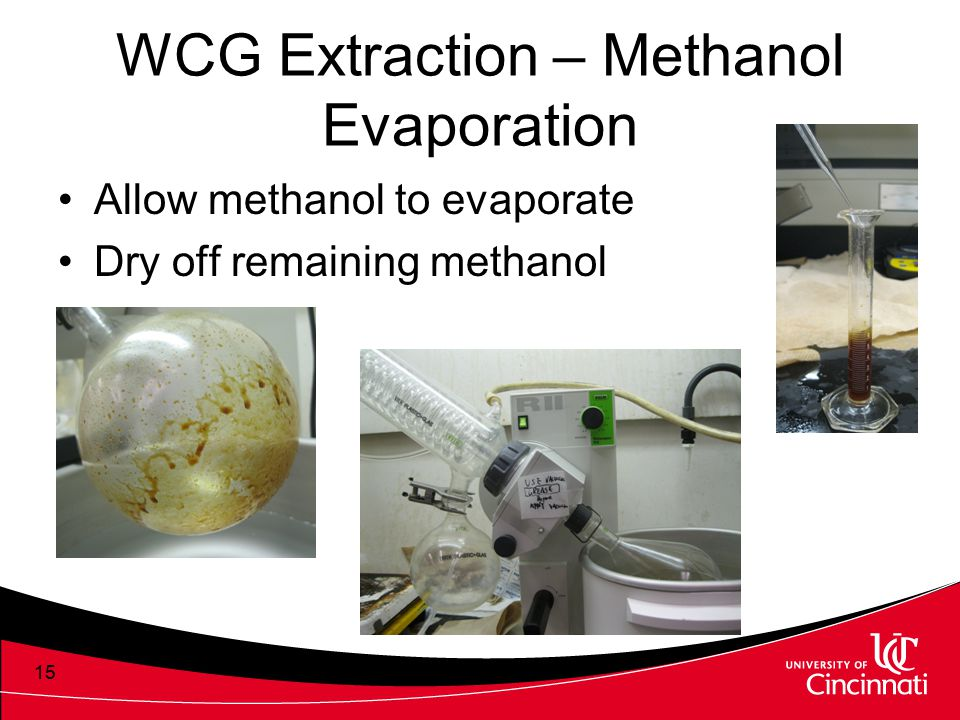 WCG Extraction – Methanol Evaporation Allow methanol to evaporate Dry off remaining methanol 15