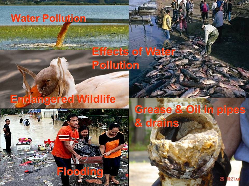 Water Pollution Grease & Oil in pipes & drains Endangered Wildlife Flooding Effects of Water Pollution