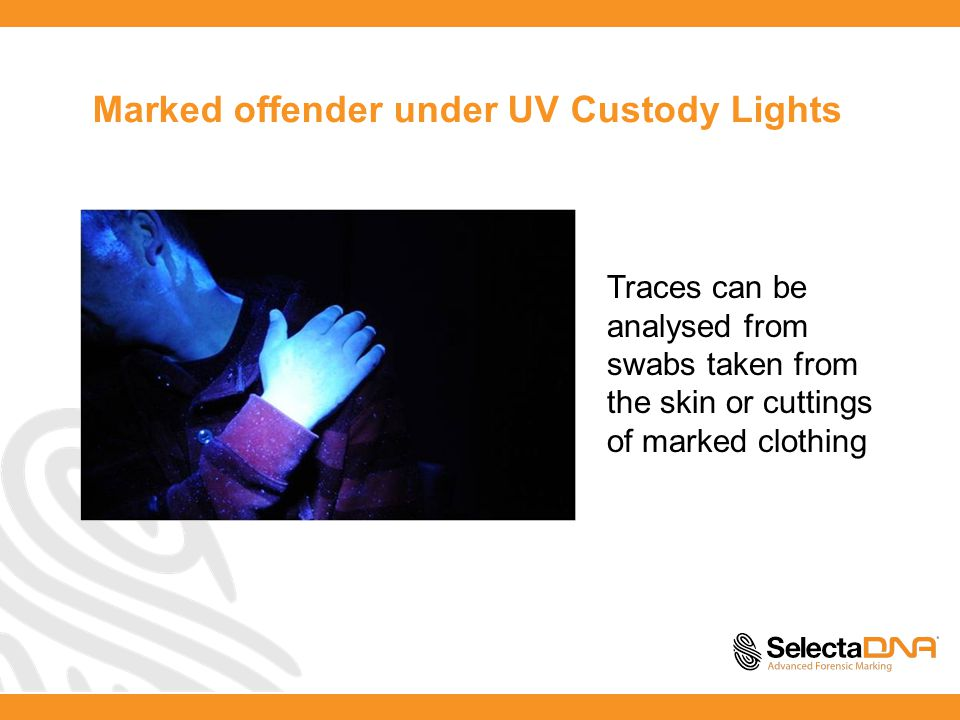 Marked offender under UV Custody Lights Traces can be analysed from swabs taken from the skin or cuttings of marked clothing