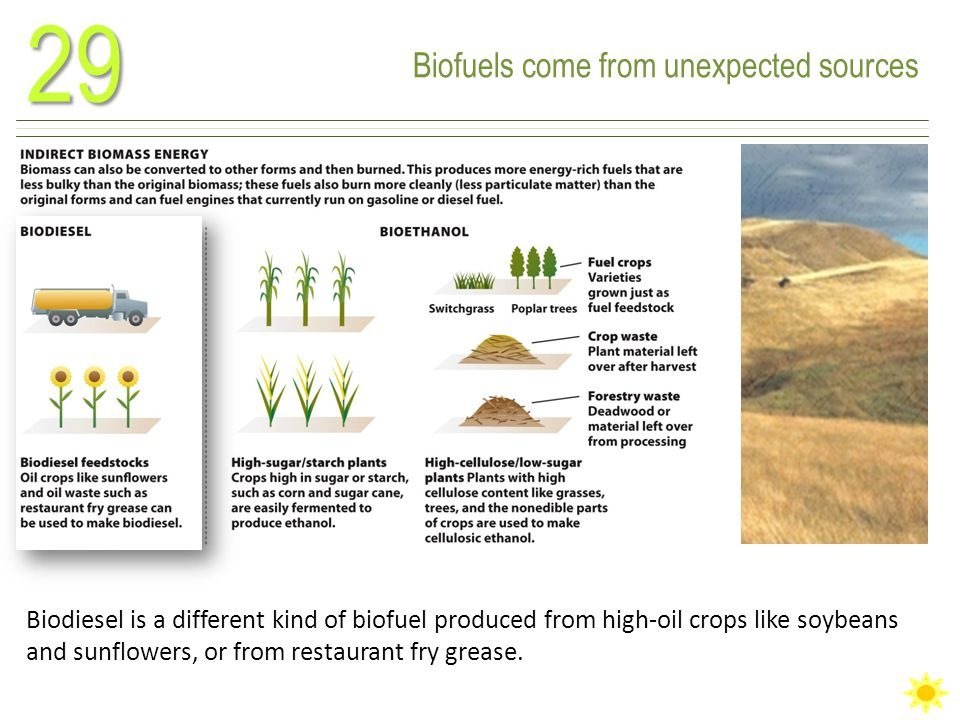 Biofuels come from unexpected sources29 Biodiesel is a different kind of biofuel produced from high-oil crops like soybeans and sunflowers, or from restaurant fry grease.