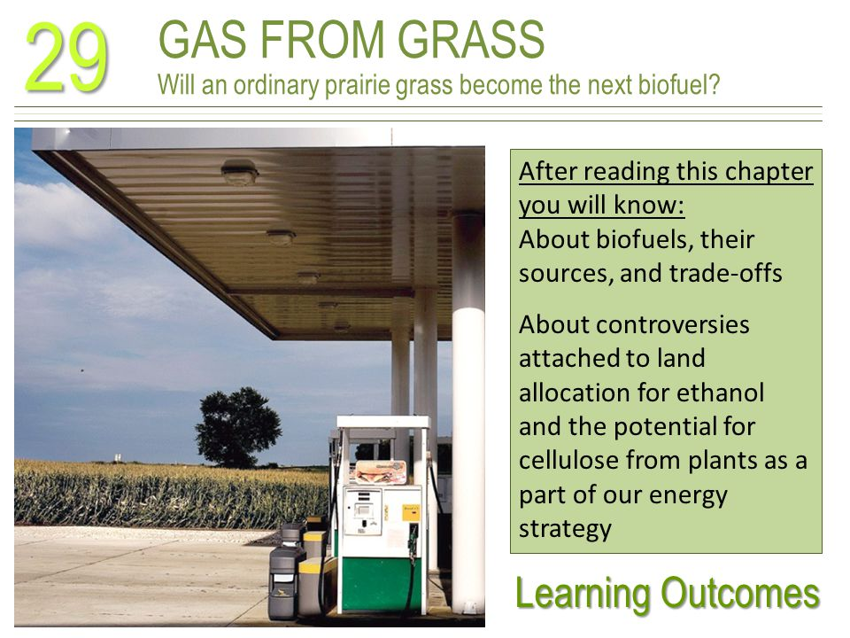 GAS FROM GRASS Will an ordinary prairie grass become the next biofuel.