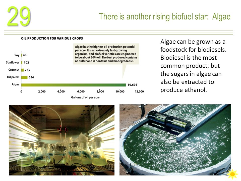 There is another rising biofuel star: Algae29 Algae can be grown as a foodstock for biodiesels.