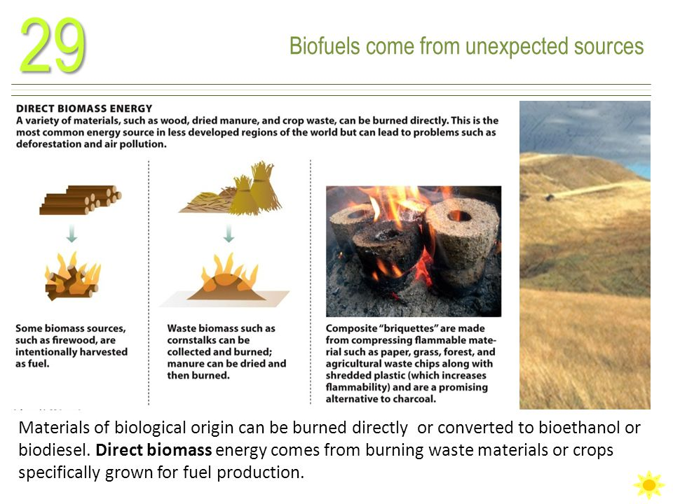 Biofuels come from unexpected sources29 Materials of biological origin can be burned directly or converted to bioethanol or biodiesel.