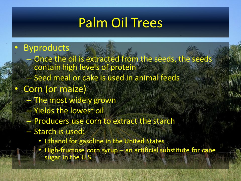 Palm Oil Trees Byproducts – Once the oil is extracted from the seeds, the seeds contain high levels of protein – Seed meal or cake is used in animal f