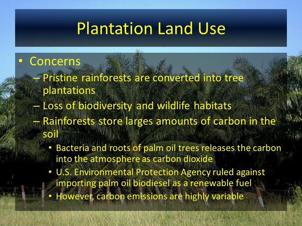 Plantation Land Use Concerns – Pristine rainforests are converted into tree plantations – Loss of biodiversity and wildlife habitats – Rainforests sto