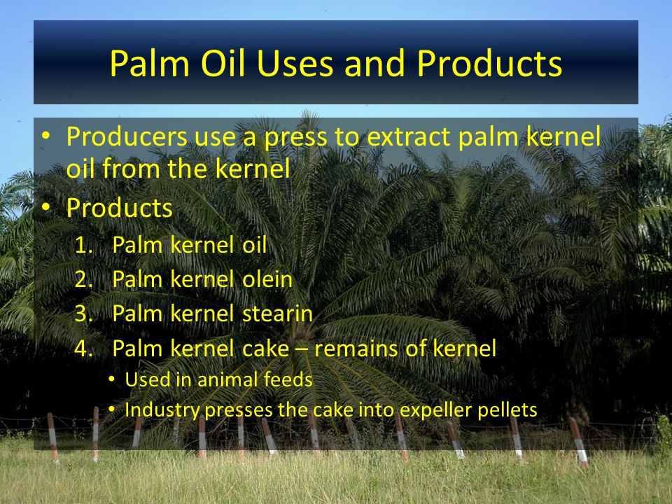 Palm Oil Uses and Products Producers use a press to extract palm kernel oil from the kernel Products 1.Palm kernel oil 2.Palm kernel olein 3.Palm kern