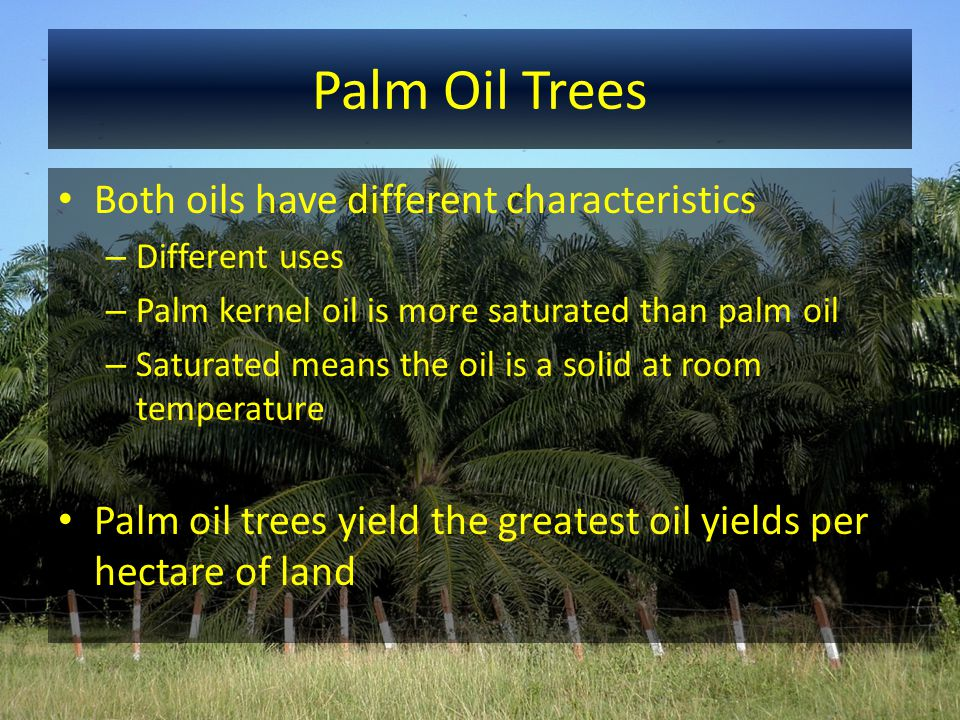 Palm Oil Uses and Products Producers use a press to extract palm kernel oil from the kernel Products 1.Palm kernel oil 2.Palm kernel olein 3.Palm kernel stearin 4.Palm kernel cake – remains of kernel Used in animal feeds Industry presses the cake into expeller pellets