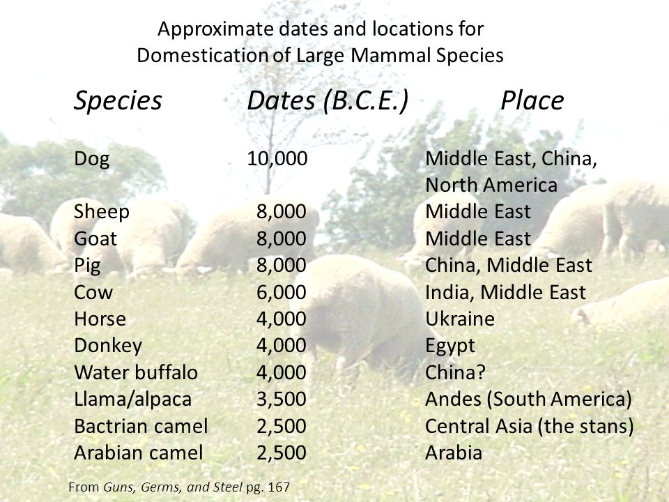 Approximate dates and locations for Domestication of Large Mammal Species Species Dog Sheep Goat Pig Cow Horse Donkey Water buffalo Llama/alpaca Bactr