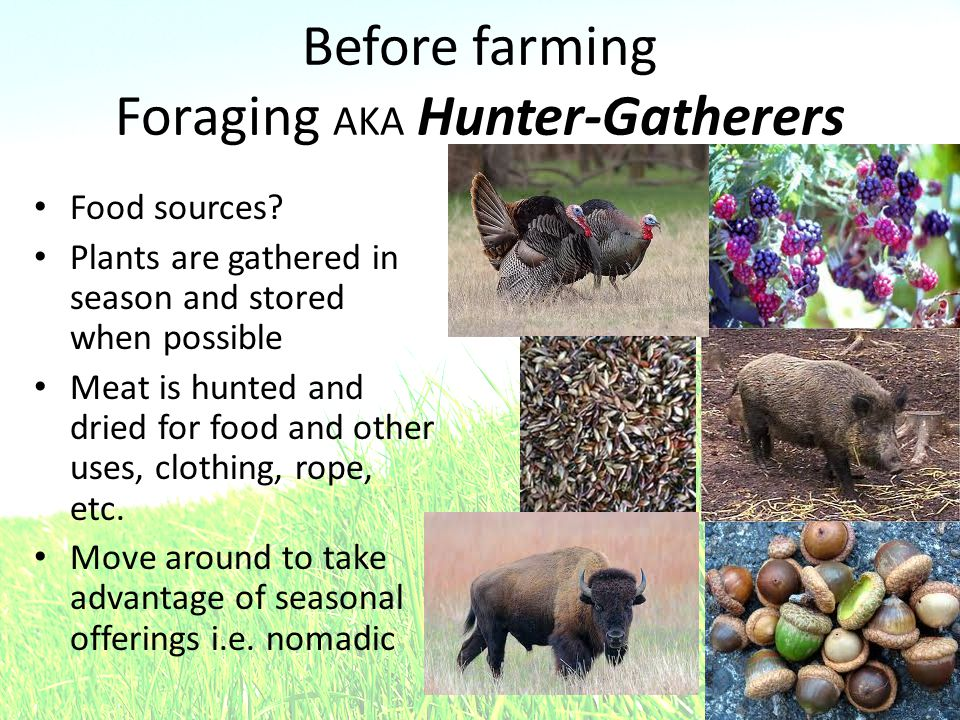 Before farming Foraging AKA Hunter-Gatherers Food sources? Plants are gathered in season and stored when possible Meat is hunted and dried for food an