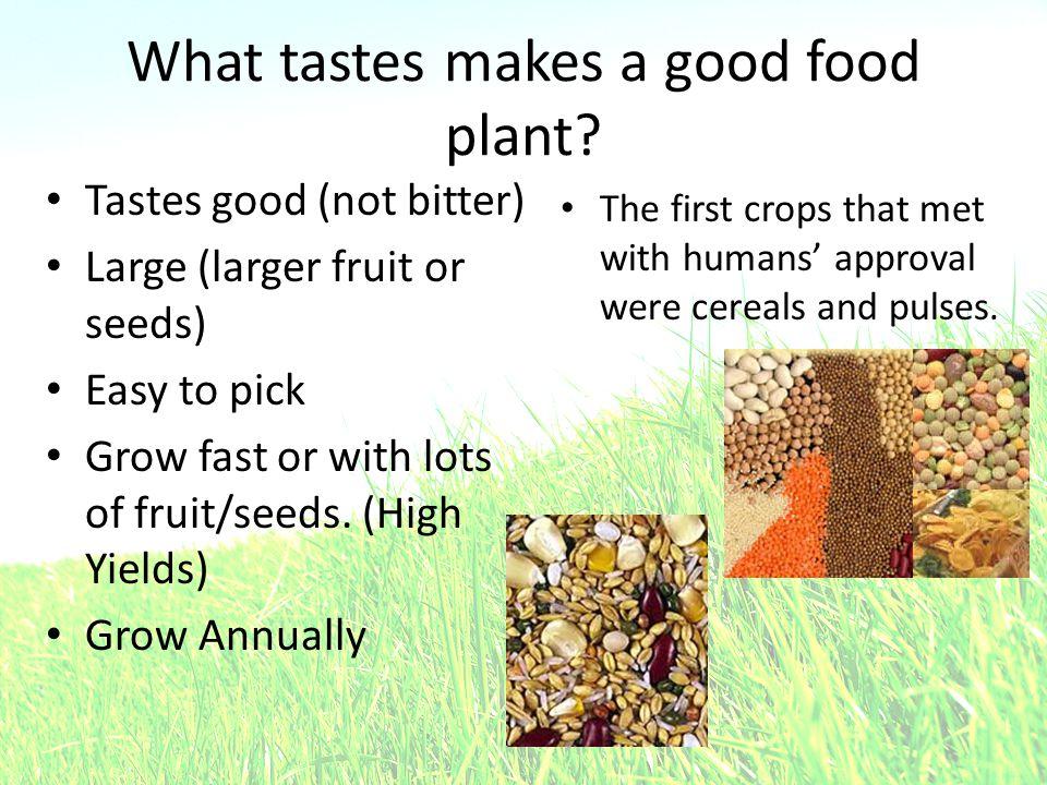 What tastes makes a good food plant.