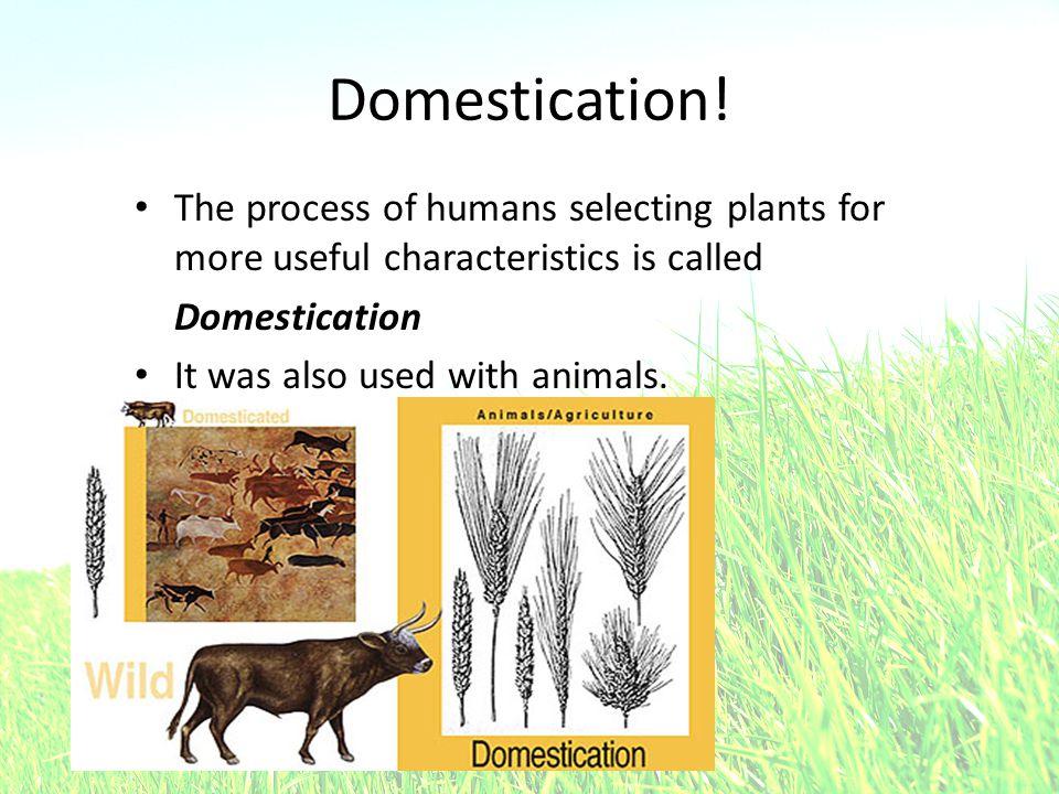 Domestication.