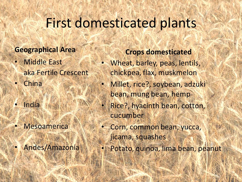 First domesticated plants Geographical Area Middle East aka Fertile Crescent China India Mesoamerica Andes/Amazonia Crops domesticated Wheat, barley,