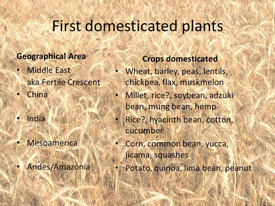 First domesticated plants Geographical Area Middle East aka Fertile Crescent China India Mesoamerica Andes/Amazonia Crops domesticated Wheat, barley, peas, lentils, chickpea, flax, muskmelon Millet, rice , soybean, adzuki bean, mung bean, hemp Rice , hyacinth bean, cotton, cucumber Corn, common bean, yucca, jicama, squashes Potato, quinoa, lima bean, peanut