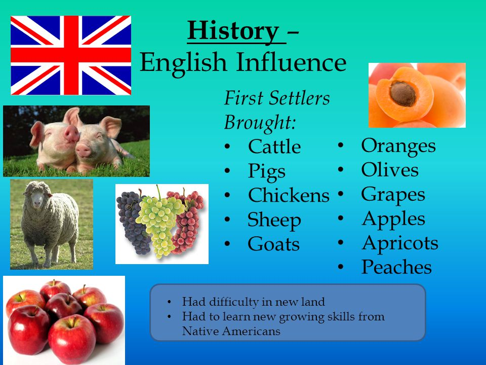 History – English Influence First Settlers Brought: Cattle Pigs Chickens Sheep Goats Oranges Olives Grapes Apples Apricots Peaches Had difficulty in new land Had to learn new growing skills from Native Americans