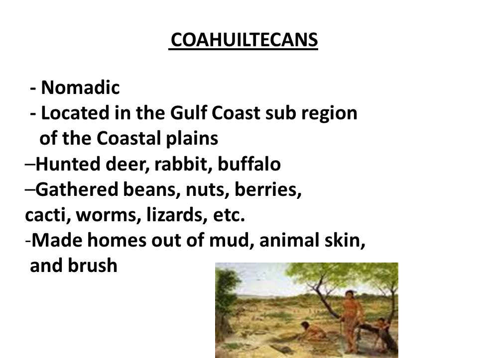 COAHUILTECANS - Nomadic - Located in the Gulf Coast sub region of the Coastal plains –Hunted deer, rabbit, buffalo –Gathered beans, nuts, berries, cac