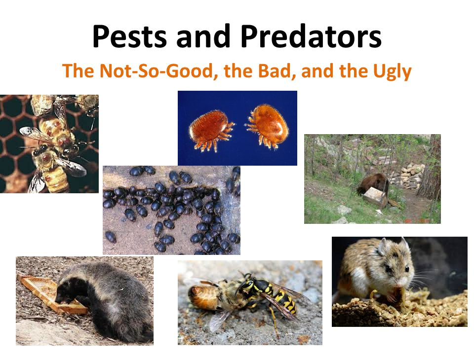 Pests and Predators The Not-So-Good, the Bad, and the Ugly