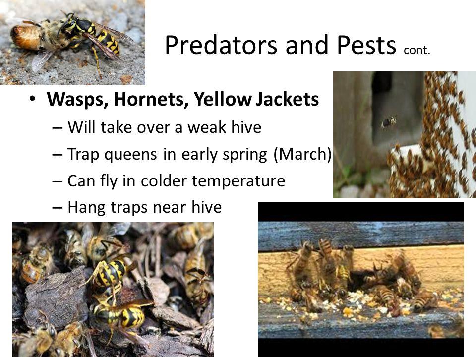 Predators and Pests cont.