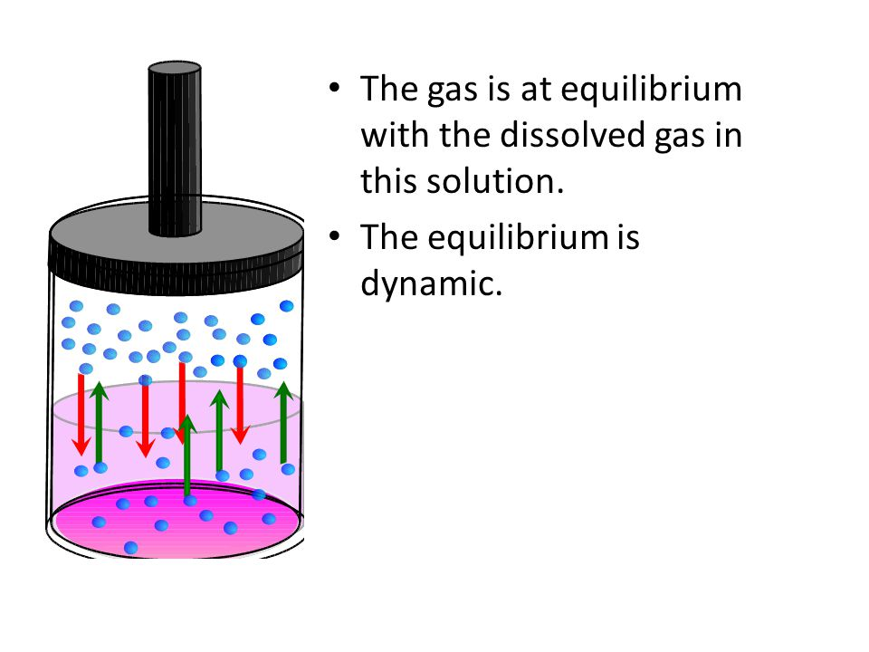 The gas is at equilibrium with the dissolved gas in this solution. The equilibrium is dynamic.