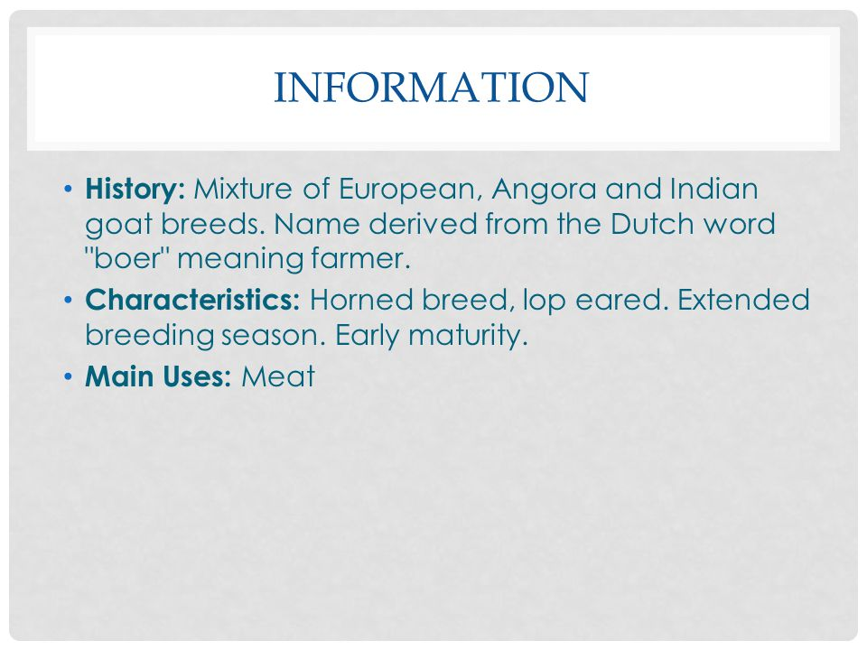 INFORMATION History: Mixture of European, Angora and Indian goat breeds.