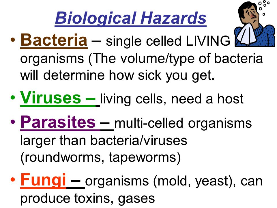 Biological Hazards Bacteria – single celled LIVING organisms (The volume/type of bacteria will determine how sick you get. Viruses – living cells, nee
