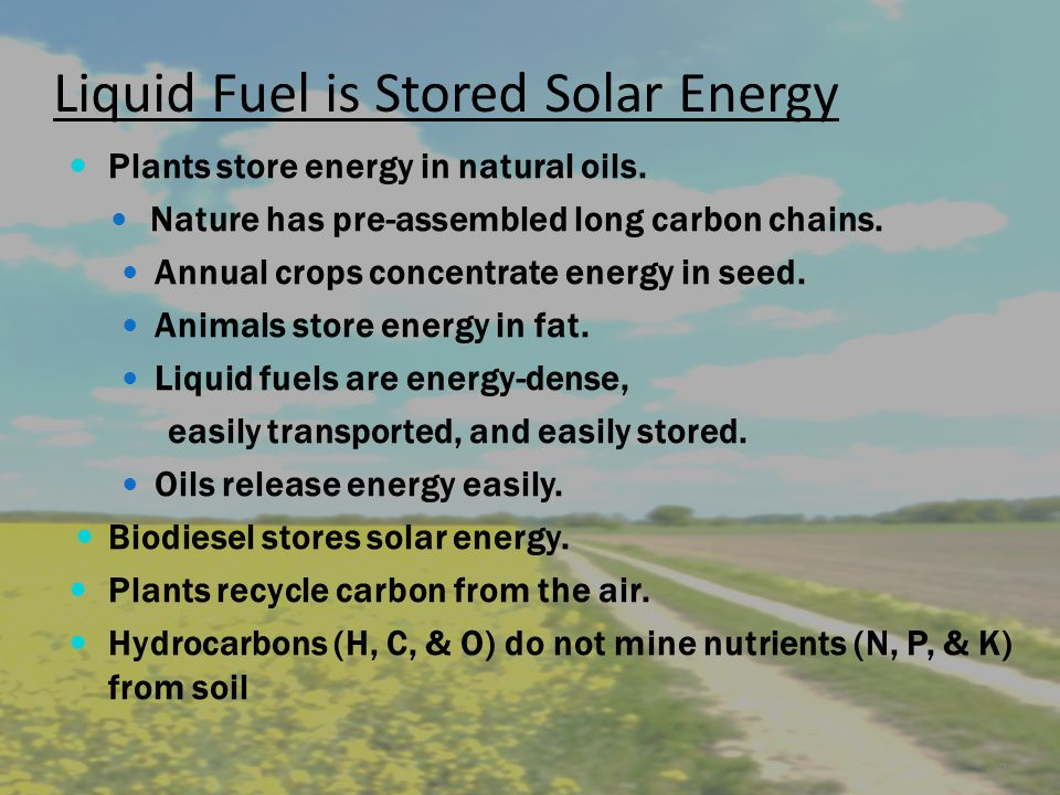 Liquid Fuel is Stored Solar Energy Plants store energy in natural oils.