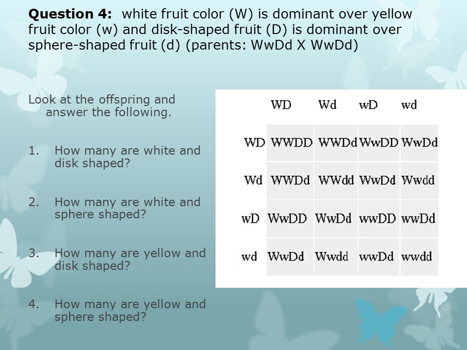 Question 4: white fruit color (W) is dominant over yellow fruit color (w) and disk-shaped fruit (D) is dominant over sphere-shaped fruit (d) (parents: WwDd X WwDd) Look at the offspring and answer the following.