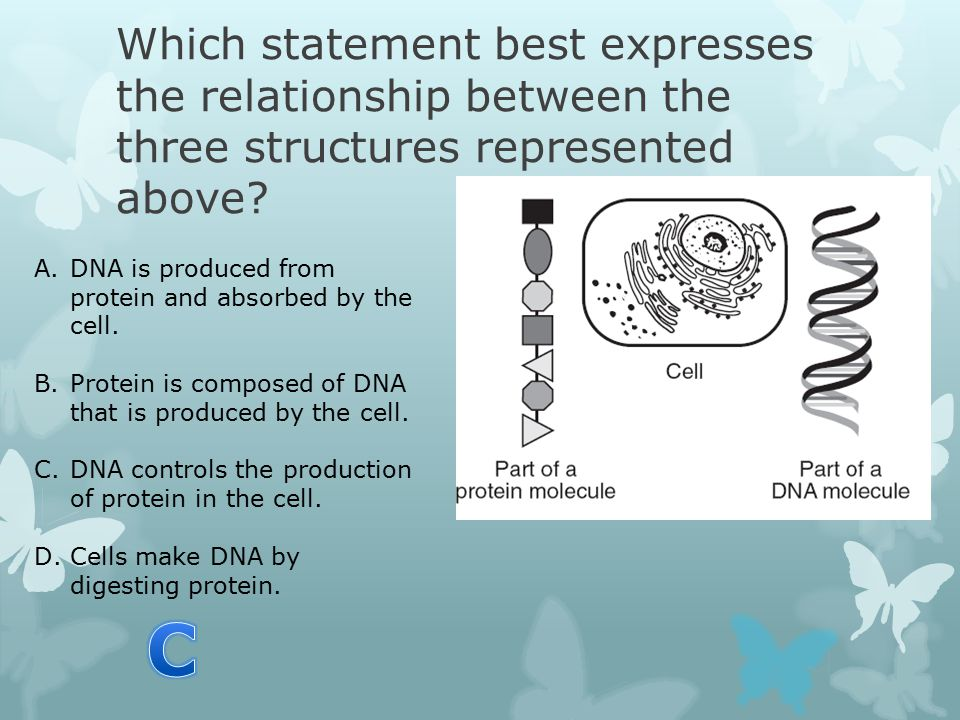 Which statement best expresses the relationship between the three structures represented above.