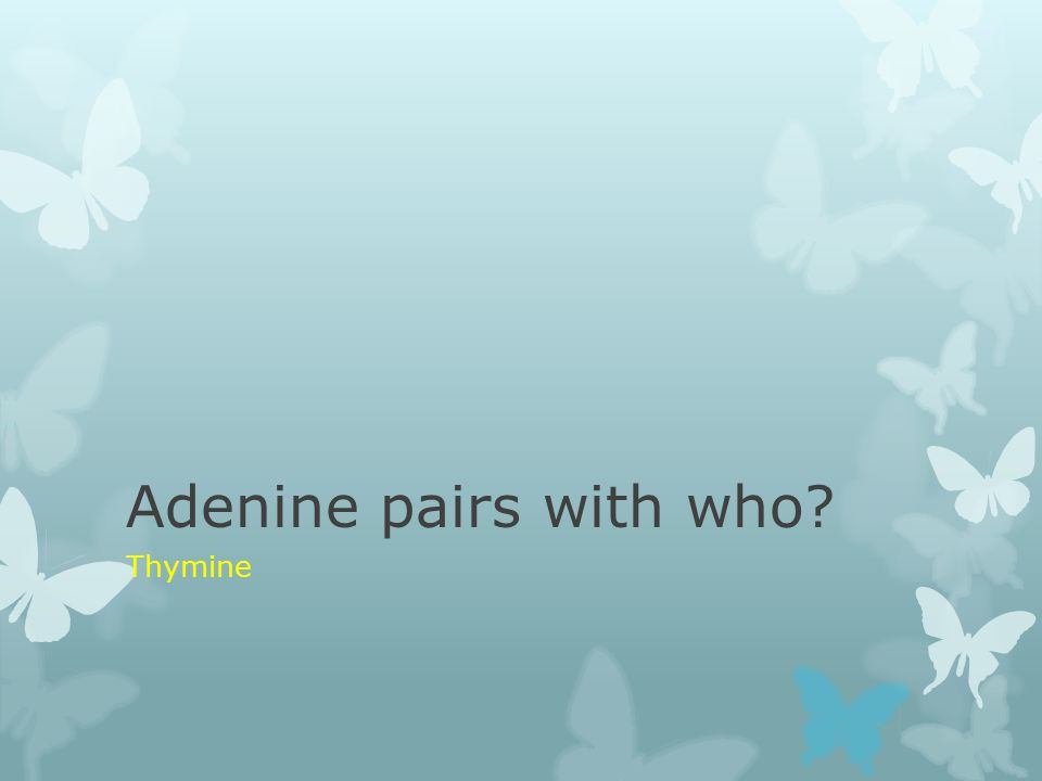 Adenine pairs with who? Thymine