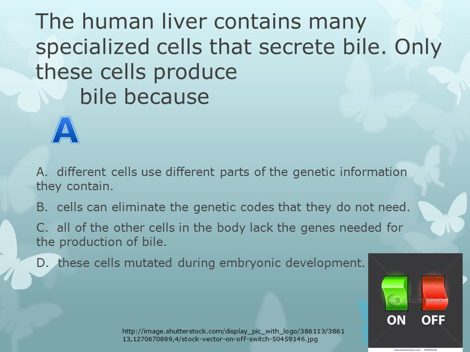 The human liver contains many specialized cells that secrete bile.