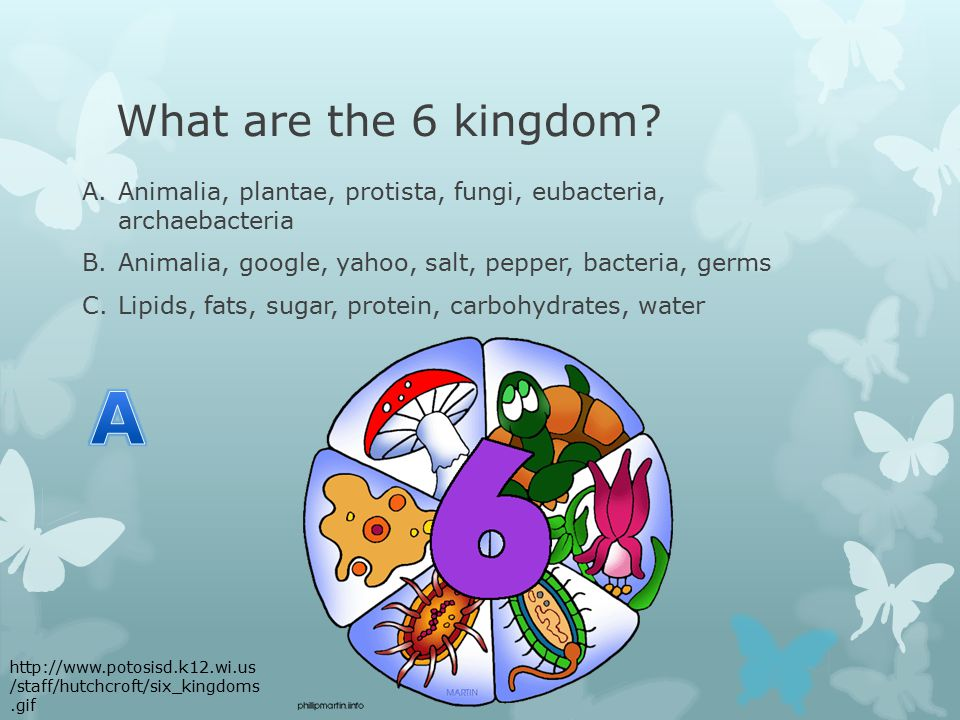 What are the 6 kingdom.