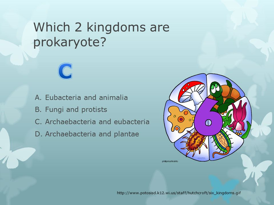 Which 2 kingdoms are prokaryote.
