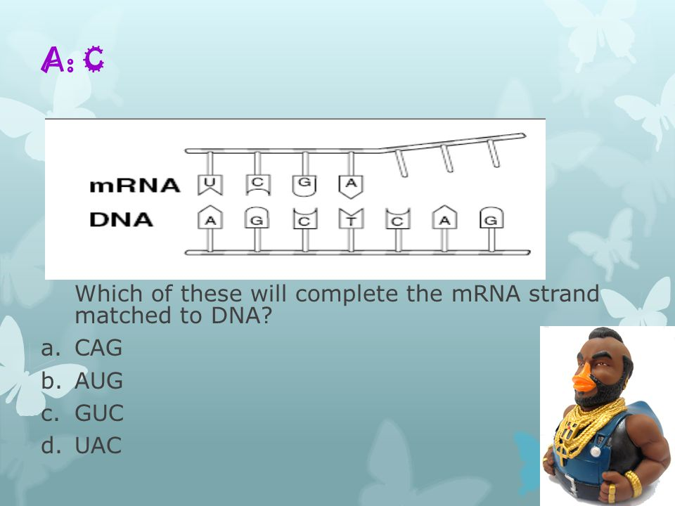 A: C Which of these will complete the mRNA strand matched to DNA? a.CAG b.AUG c.GUC d.UAC