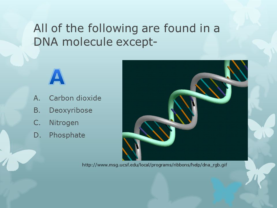 All of the following are found in a DNA molecule except- A.Carbon dioxide B.Deoxyribose C.Nitrogen D.Phosphate http://www.msg.ucsf.edu/local/programs/ribbons/help/dna_rgb.gif
