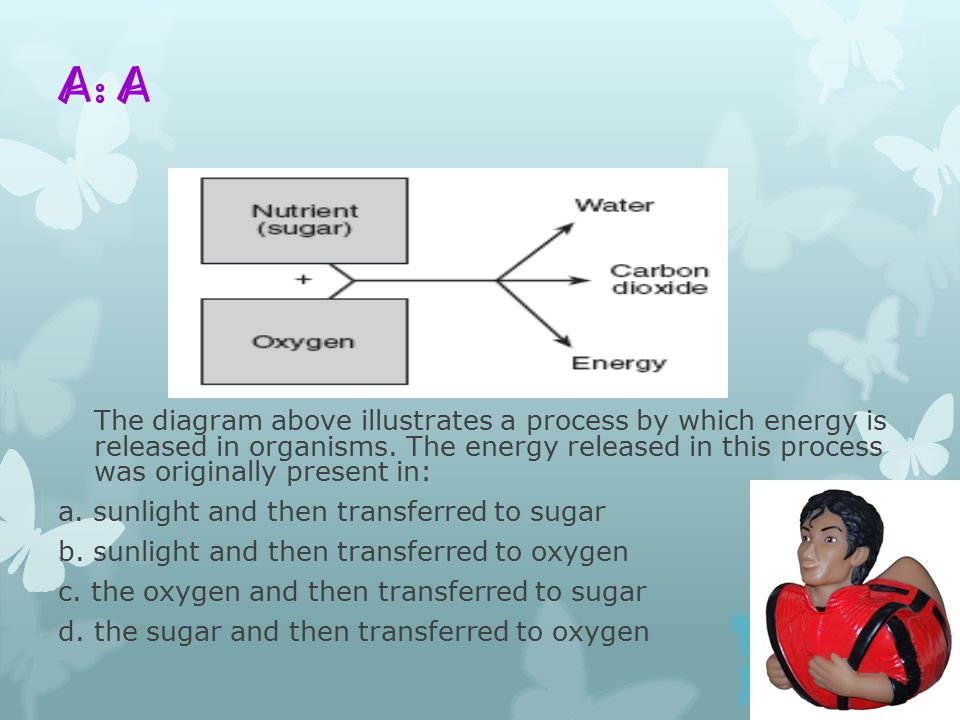 A: A The diagram above illustrates a process by which energy is released in organisms.